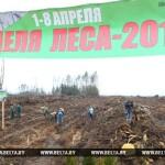 Более 20 млн деревьев посадили белорусы за время Недели леса-2017