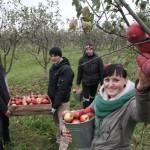 Вкусные витамины вырастили в Ляховичском государственном аграрном колледже